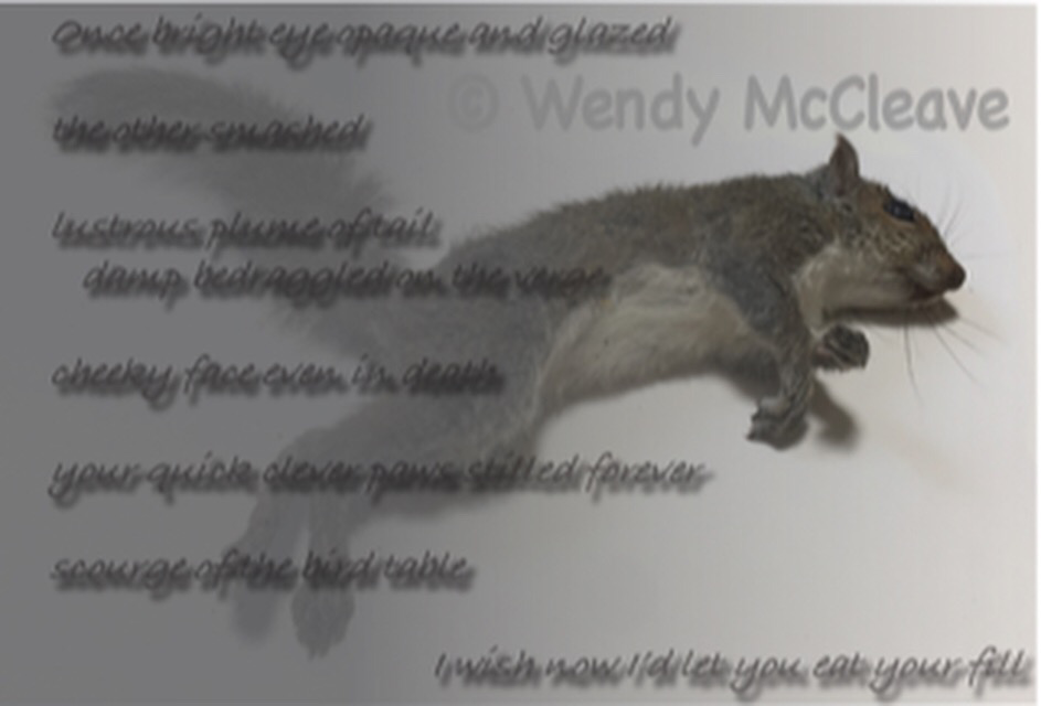 Image of dead squirrel with text