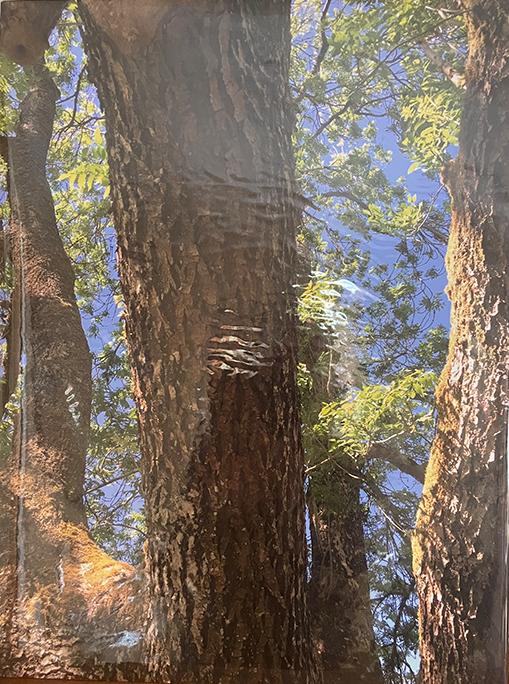 Tree trunks lit by sun