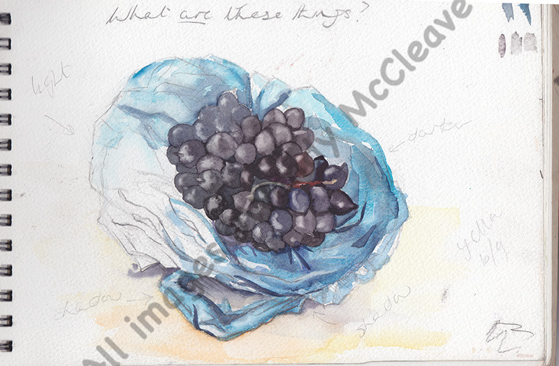 Creta noir, watercolour and body colour study of some strange, grape-like things at Hengistbury Head.