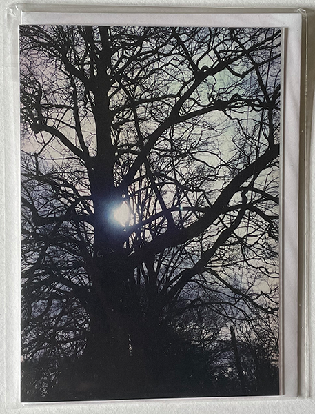 Greeting Card of winter sun shining through bare tree branches