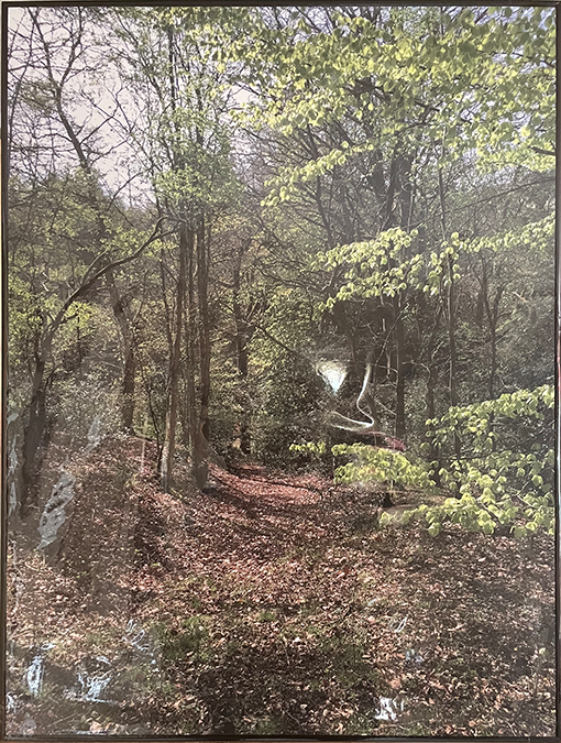Photograph of a woodland in spring