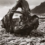 Greymouth Stump