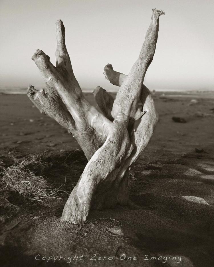 Hokatika Driftwood