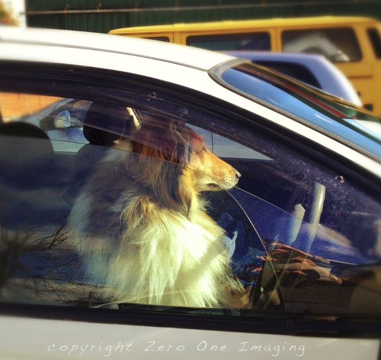 Lassie Drives