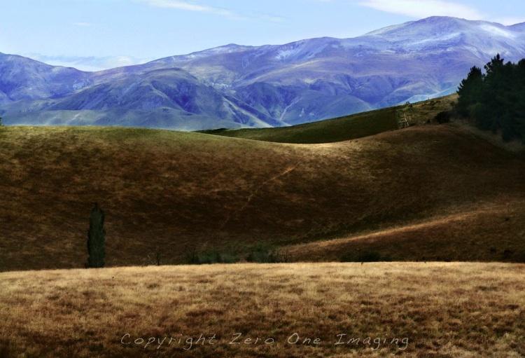 NZ field