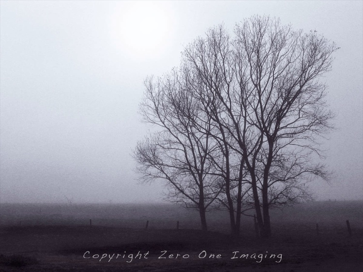 three trees in fog 2