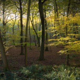 Autumn in Bush Wood, Stoke Row