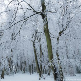Busgrove Woods in snow