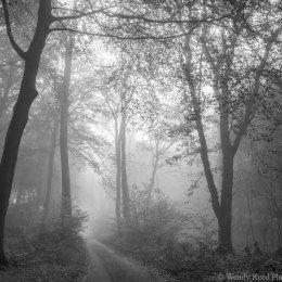 Newnhamhill Bottom Wood in the mist