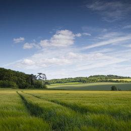 Crop fields near Ewelme