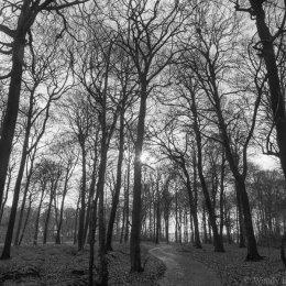 Winter light - Nott Wood