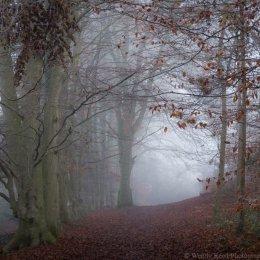 Swyncombe mists