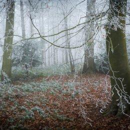 Frost and mist - Ipsden