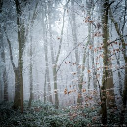 Frost, mist and beech