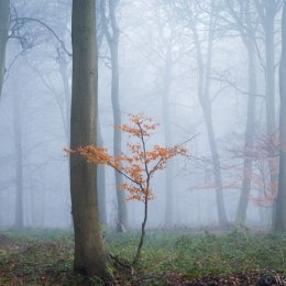 The Lone Sapling - shortlisted for Landscape Photographer of the Year 2020