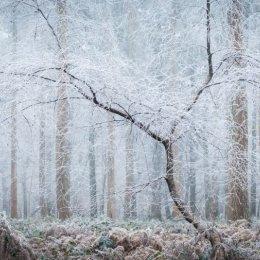 Hoar frost - Nott Wood
