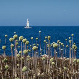 Menorcan coastline
