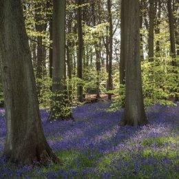 Padnells Wood panorama