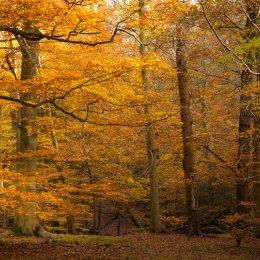 Egypt Wood, Burnham Beeches