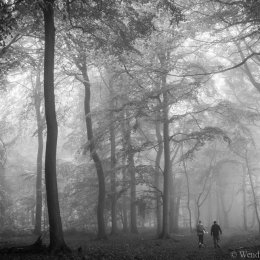 Nott Wood in the mist