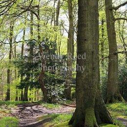 Pishillbury Wood