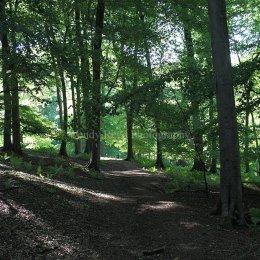 Shotridge Wood near Christmas Common