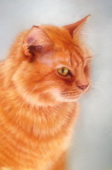 Billy, pastel, commission