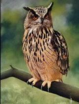 Eagle Owl, pastel £225