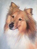 Finn, Portrait in Pastel, commission