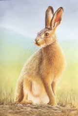 Hare, Sold
