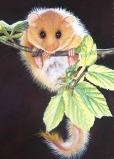 The Dormouse Pastel sold