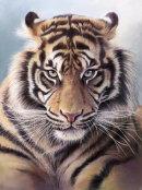 Tiger Eyes £400