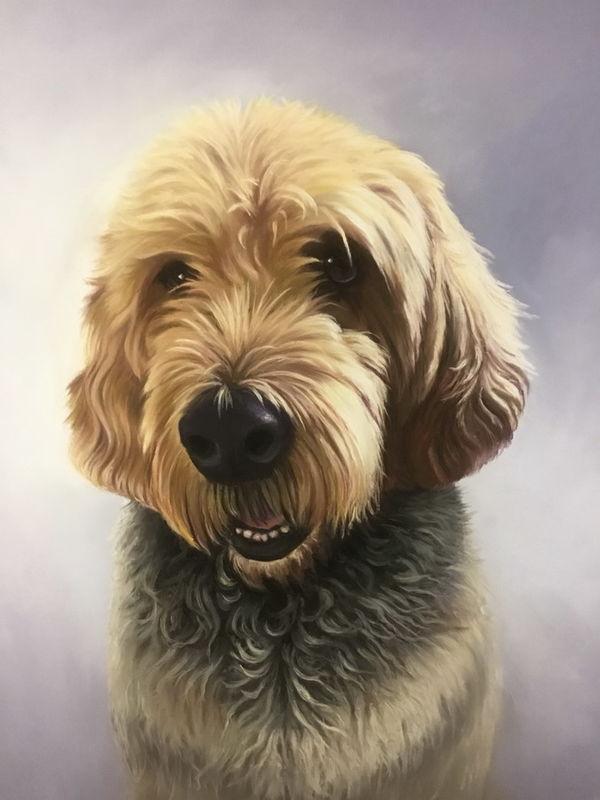 Tracker, portrait of an Otterhound, commission