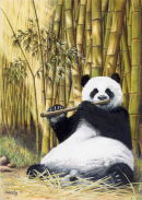 Panda, Flutewise cover design, print available £20