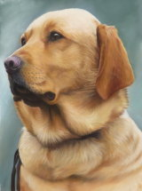Auctioned for the Guide Dogs for the Blind raising £1066