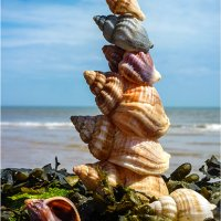 466-Shell Stack