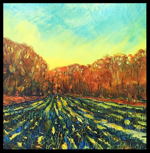 "Wet Field (oils on canvas) 16"" x 16"" £120"