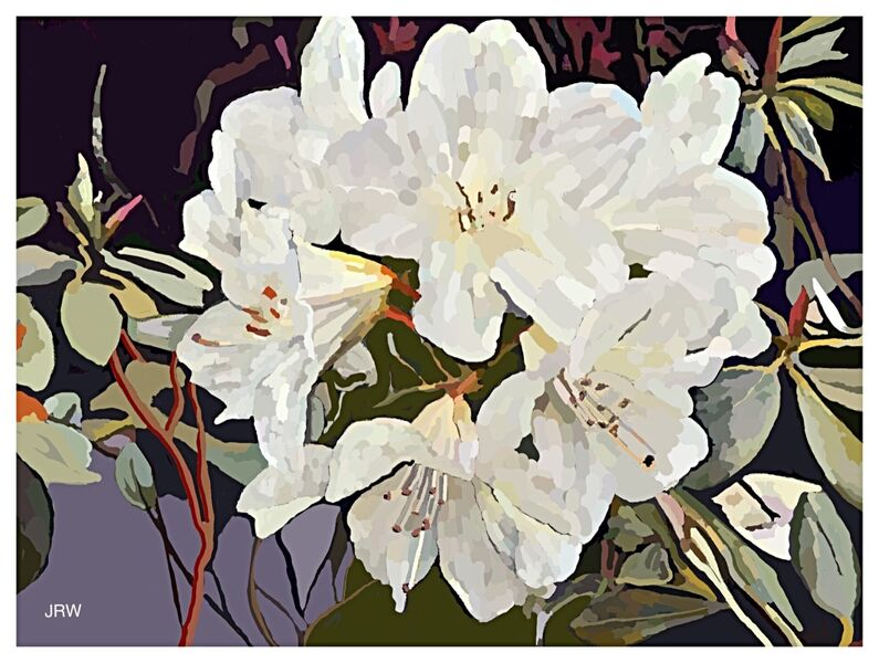 Rhododendrons (digital)