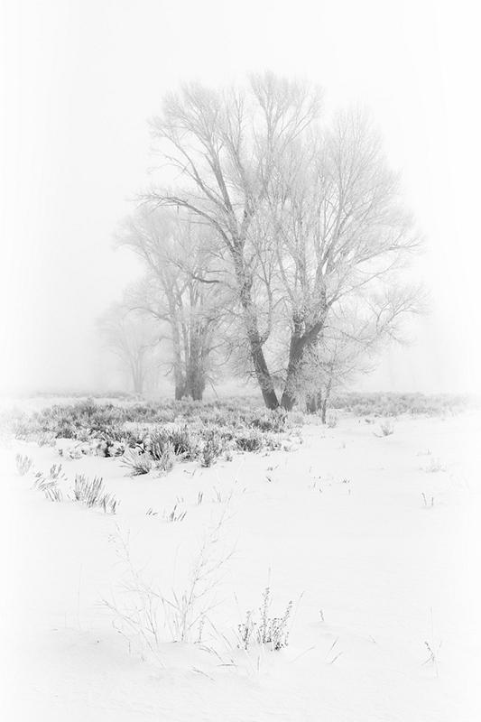 Stephen Lee - Ice Trees