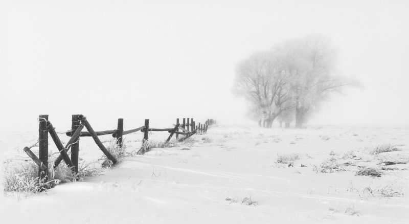 02 Fence Line by Jane Lee
