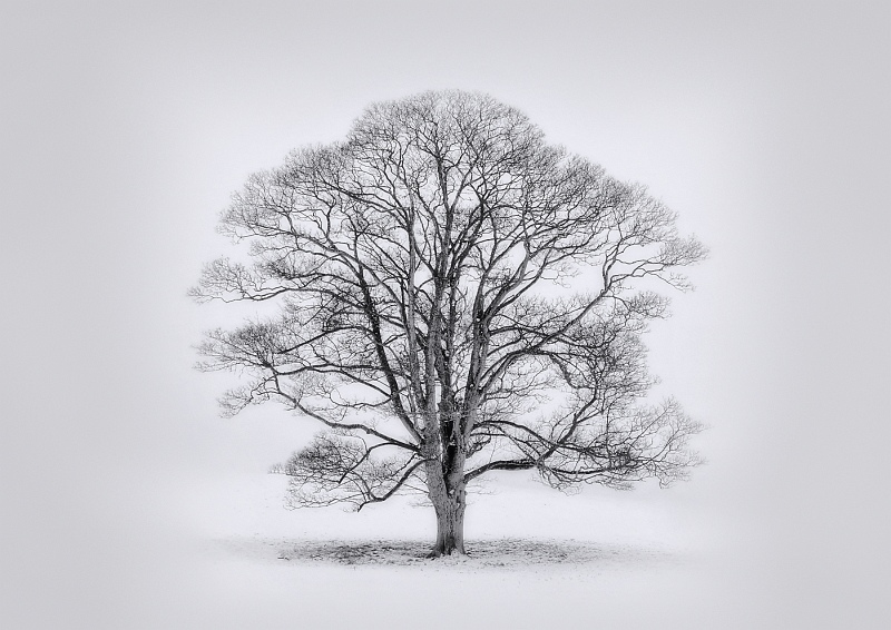 02 Tree in Winter by Tony Gill