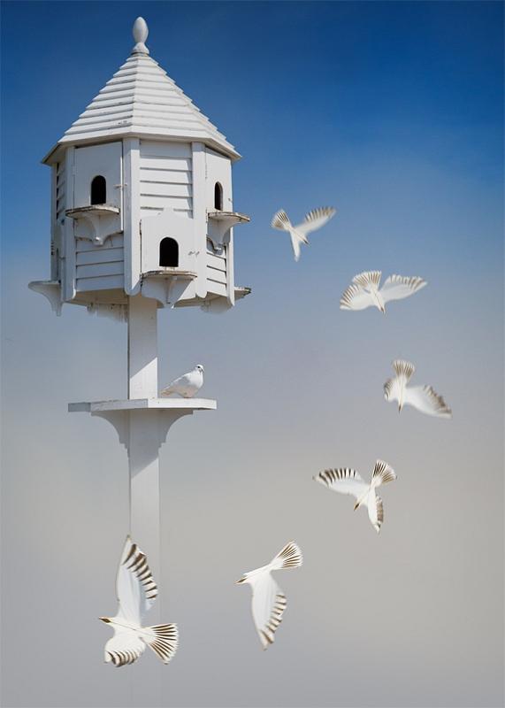 03 Doves