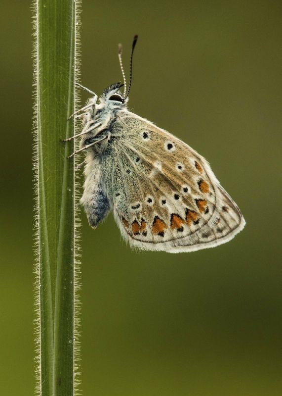 05 Blue Butterfly by Annette Beardsley