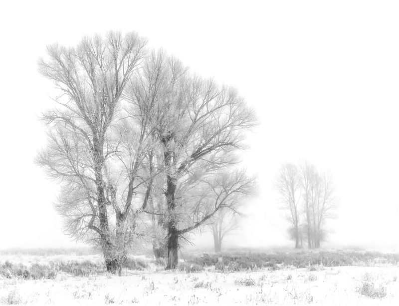 05 Frosted Trees by Jane Lee