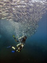 05 Swimming with Jacks by Spike Piddock