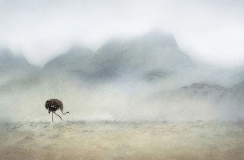 05 The Ostrich's Journey by Lisa Bukalders