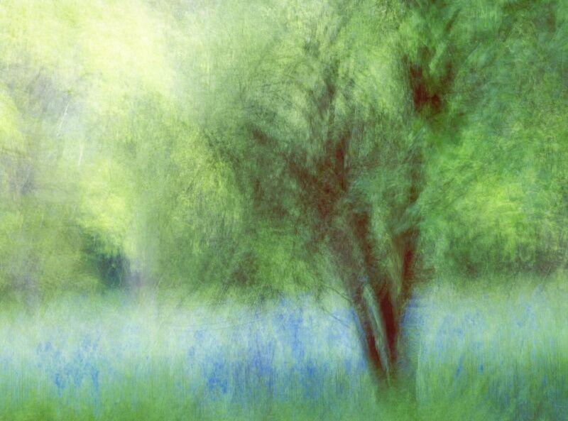 10 Woodland Glade by Tony Gill
