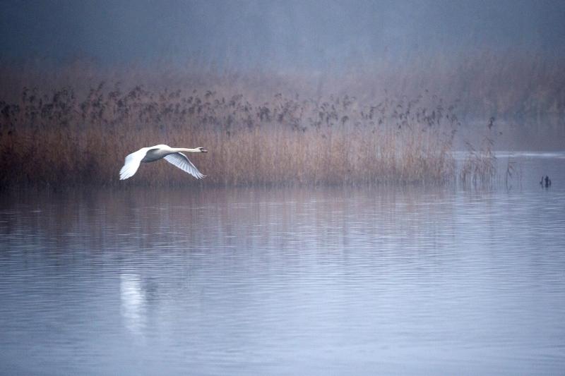 15 Swan Lake by Bob Davies