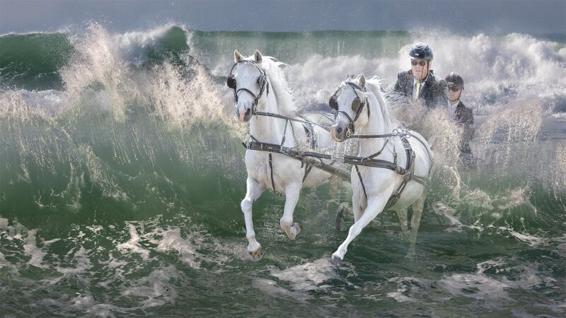 29 SeaHorse Race by Steve Lord