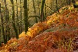 2 Autumn Morning by Val Brierley LRPS